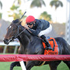 Mr Speaker wins the 2013 Dania Beach Stakes.<br /> Coglianese Photos/Kenny Martin