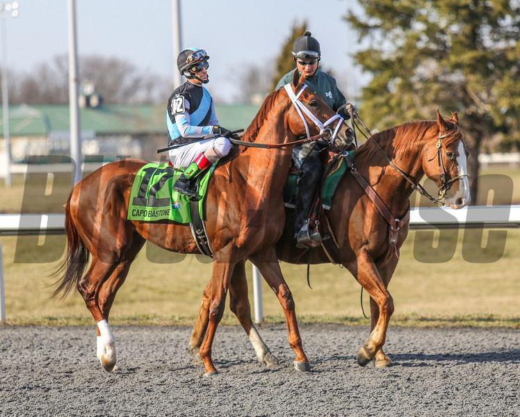 Capo Bastone at Turfway Park on March 23, 2013<br /> ©Photo by: Kevin Thompson