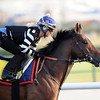 Trade Storm, Meydan, Dubai World Cup 2013; photo by Mathea Kelley; Dubai Duty Free, 3/27/13