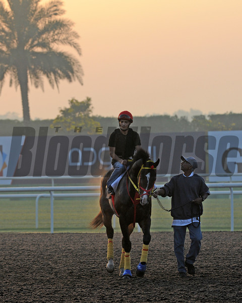 Trinniberg, Meydan, March 28th, 2013, photo by Mathea Kelley, Dubai World Cup 2013, Dubai Golden Shaheen