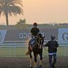 Trinniberg, Meydan, March 28th, 2013, photo by Mathea Kelley, Dubai World Cup 2013, Dubai Golden Shaheen