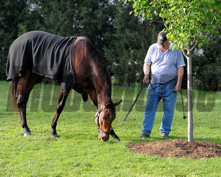 Caption:  Point of Entry grazes<br /> works and scenes at Churchill Downs near Louisville, Ky. on May 2, 2013, during Kentucky Derby and Kentucky Oaks week.<br /> 1Works5_2_13 image799<br /> ©Photo by Anne M. Eberhardt