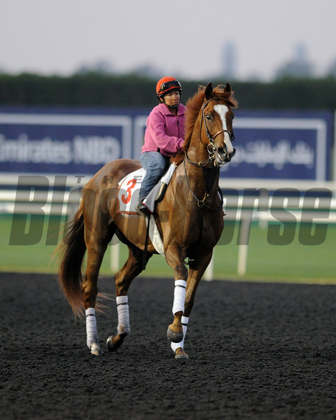 Dullahan, March 27th, 2013, photo by Mathea Kelley, Dubai World Cup 2013, Dubai World Cup;