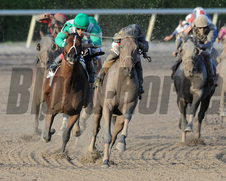 River Seven overcame a lack of experience on dirt to post a track-record win over a good field in the $100,000 Harlan's Holiday Stakes at odds of 12-1 Dec. 22 at Gulfstream Park.<br /> Coglianese Photos/Shannon Spies