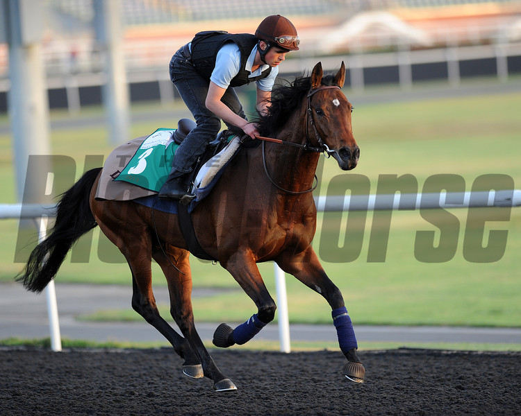 Dunaden, March 27th, 2013, photo by Mathea Kelley, Dubai World Cup 2013, Dubai Sheema Classic