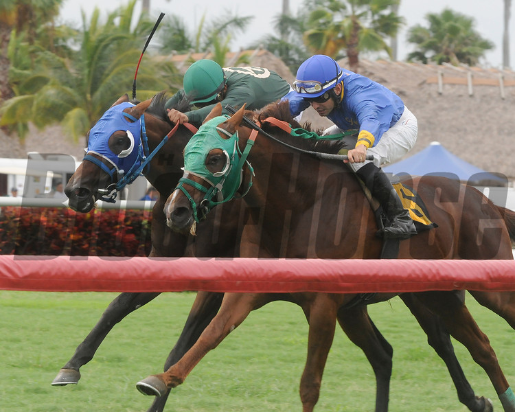 Backseat Memories/Grand Tito dead heat in 2013 Showing Up Stakes.<br /> Coglianese Photos/Kenny Martin
