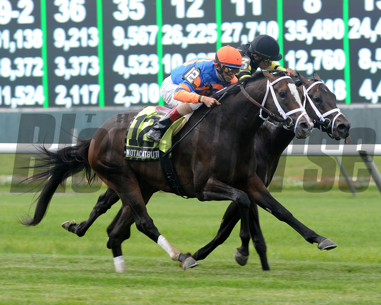 Notacatbutallama wins the 2013 Hill Prince.<br /> Coglianese Photos