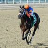 Stopchargingmaria wins the Tempted Stakes 11/3/2013.<br /> Coglianese Photos/JOE LABOZZETTA