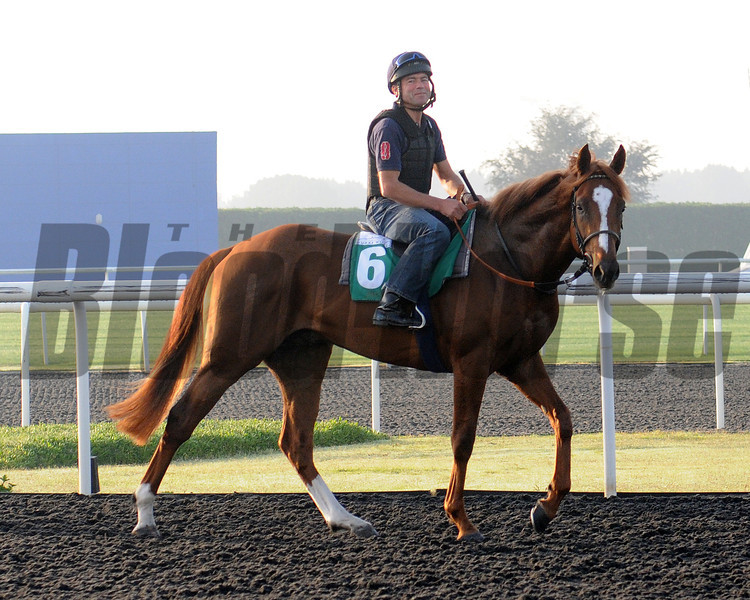 Girolamo, Meydan, March 28th, 2013, photo by Mathea Kelley, Dubai World Cup 2013, Dubai Sheema Classic;