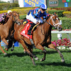 Regalo Mia wins the 2013 Orchid.<br /> Coglianese Photos