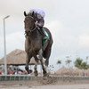 Ron the Greek wins the 2013 Florida Sunshine Millions Classic.<br /> Coglianese Photos