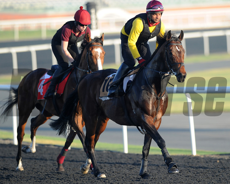Reply; Meydan; March 29th; 2013; photo by Mathea Kelley; Dubai Golden Shaheen