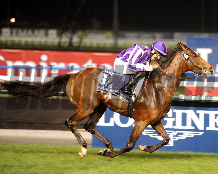 St Nicholas Abbey winning the $5 million Dubai Sheema Classic.<br /> Photo by Dave Harmon
