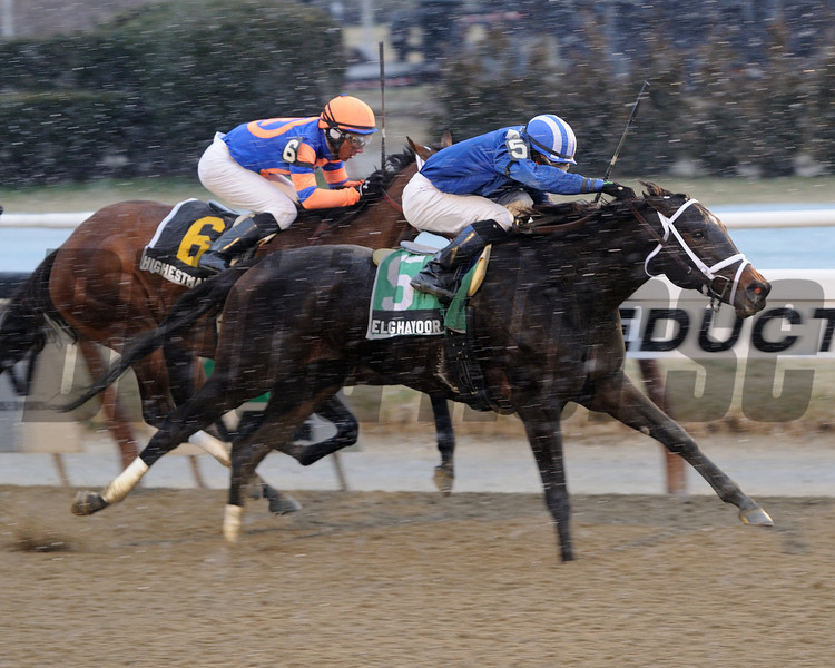 Elghayoor wins the 2013 Cicada.<br /> Coglianese Photos