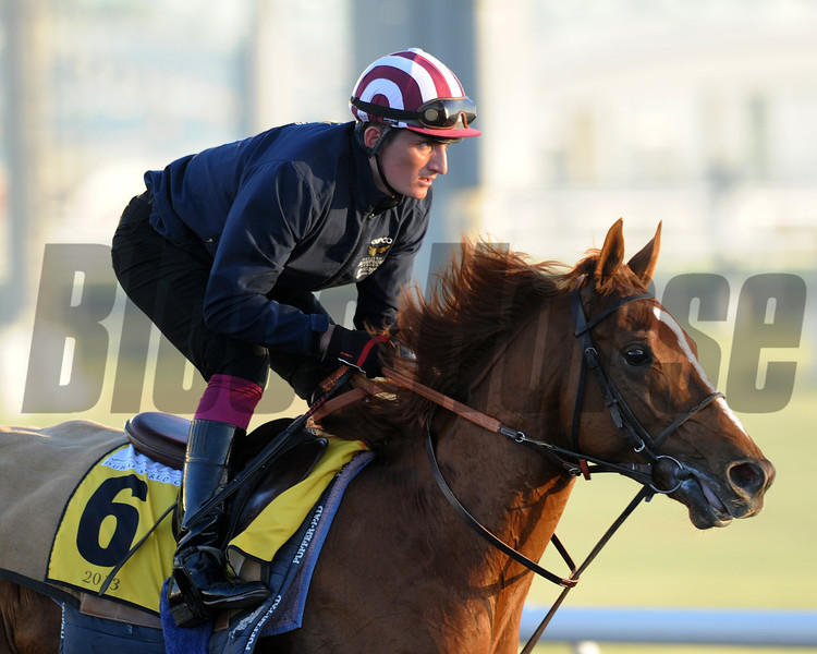 French Fifteen; Meydan; March 29th; 2013; photo by Mathea Kelley; Dubai World Cup 2013;
