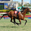 Varsity wins the 2013 Gulfstream Park Turf Sprint Stakes.<br /> Coglianese Photos/Leslie Martin