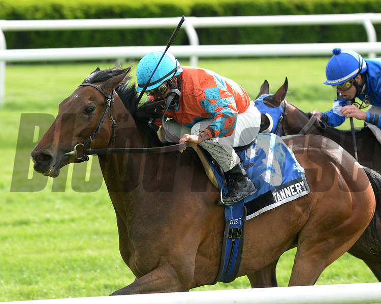 Tannery wins the 2013 Sheepshead Bay Stakes at Belmont Park. <br /> Photo by: Joe Labozzetta/NYRA