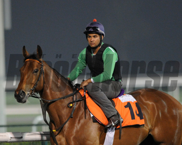 Ganas, Meydan, March 29th, 2013, photo by Mathea Kelley, Dubai World Cup 2013, Al Quoz Sprint