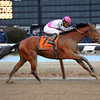 Vyjack wins the 2013 Gotham Stakes.<br /> Coglianese Photos