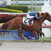 Golden Mystery wins the Florida Sunshine Millions Filly and Mare Sprint.<br /> Coglianese Photos
