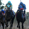 Private Zone, right, and Justin Phillip, left, racing in the Vosburgh Stakes. 9/28/2013<br /> Coglianese Photos
