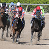 Carolina Lizard wins the 2013 Iron Lady Stakes.<br /> Coglianese Photos