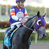 Mucho Mas Macho wins the 2013 Ft. Lauderdale Stakes.<br /> Coglianese Photos/Courtney Heeney