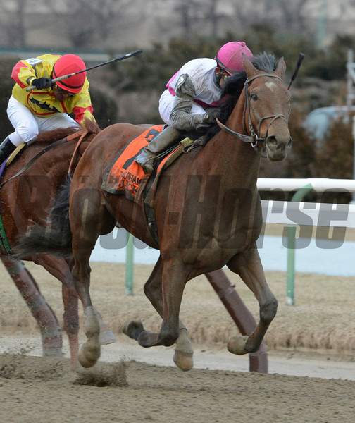 Vyjack with jockey Joel Rosario wins the Gotham at Aqueduct Race Course 3/3/13.  Photo by Skip Dickstein