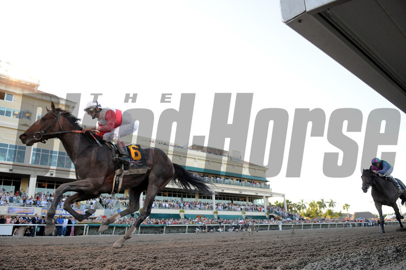 Orb wins the 2013 Florida Derby.<br /> Coglianese Photos