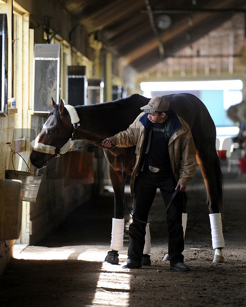 Orb in his shedrow after arriving at Belmont Park following his Kentucky Derby 139 victory.<br /> 5/5/2013<br /> Photo by Coglianese Photos