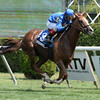Hessonite wins the 2013 On the Bus Stakes.<br /> Coglianese Photos