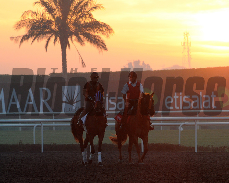 Private Zone; Meydan; March 29th; 2013; photo by Mathea Kelley; Dubai World Cup 2013; Dubai Golden Shaheen