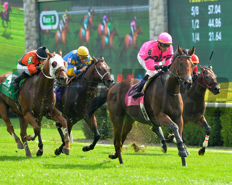 Havelock, Garret Gomez up wins the Woodford Stakes, Keeneland Race Course, Lexington, KY, 10/5/13, photo by Mathea Kelley;
