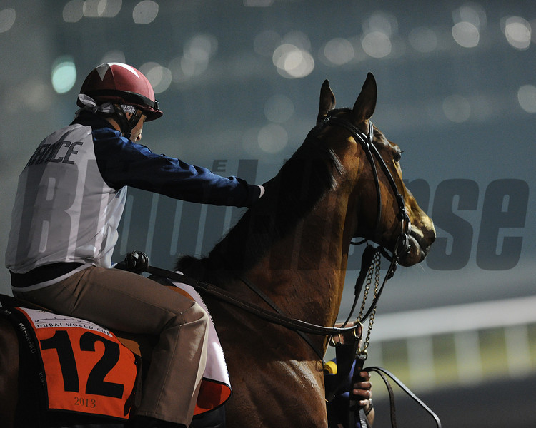 Varsity, Meydan, March 29th, 2013, photo by Mathea Kelley, Dubai World Cup 2013, Al Quoz Sprint