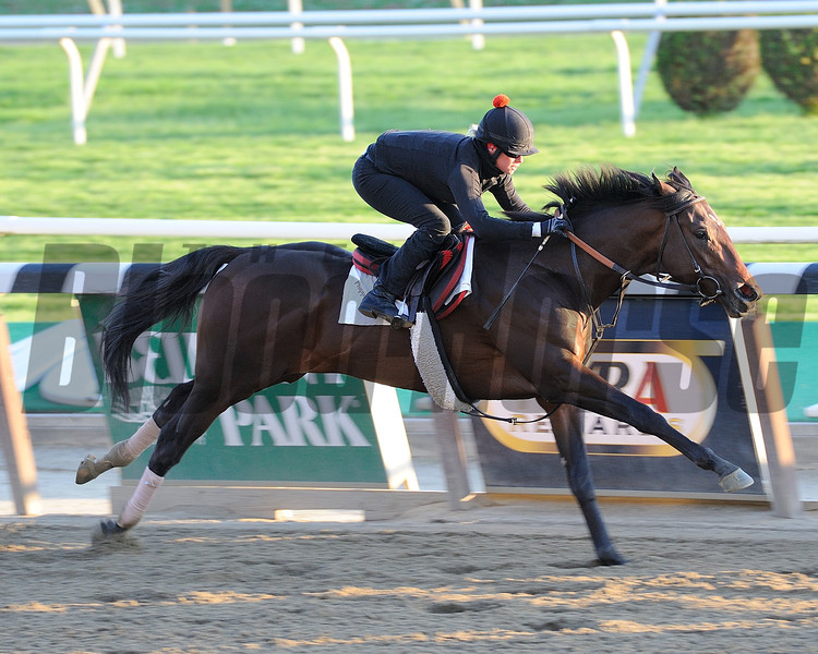 Orb works out at Belmont Park on May 13, 2013 in preperation for the Preakness <br /> Photo by: Adam Coglianese/NYRA