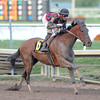 River Seven overcame a lack of experience on dirt to post a track-record win over a good field in the $100,000 Harlan's Holiday Stakes at odds of 12-1 Dec. 22 at Gulfstream Park.<br /> Coglianese Photos/Laura King