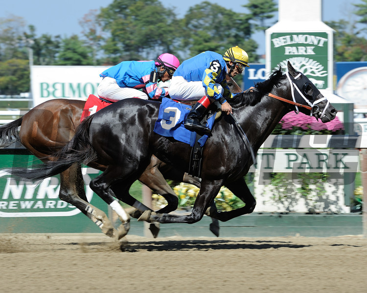 Shanghai Bobby wins the 2013 Aljamin Stakes. Coglianese Photos.