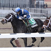 Elghayoor wins the 2013 Cicada.<br /> Coglianese Photos/Joe Labozzetta