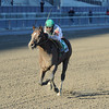 Palace wins the 2013 Fall Highweight.<br /> Coglianese Photos