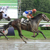 Notacatbutallama wins the 2013 Hall of Fame.<br /> Coglianese Photos