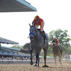 Midnight Lucky wins the Acorn Stakes.<br /> Coglianese Photos