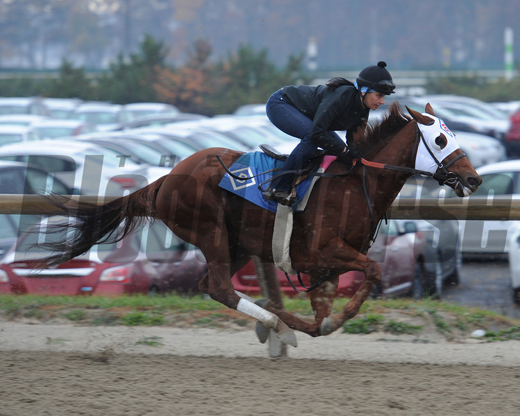 Groupie Doll Works at Belmont Park, November 16, 2013. <br /> Coglianese Photos/Susie Raisher