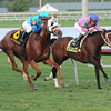Baffle Me wins the South Beach Stakes.<br /> Coglianese Photos/Lauren King