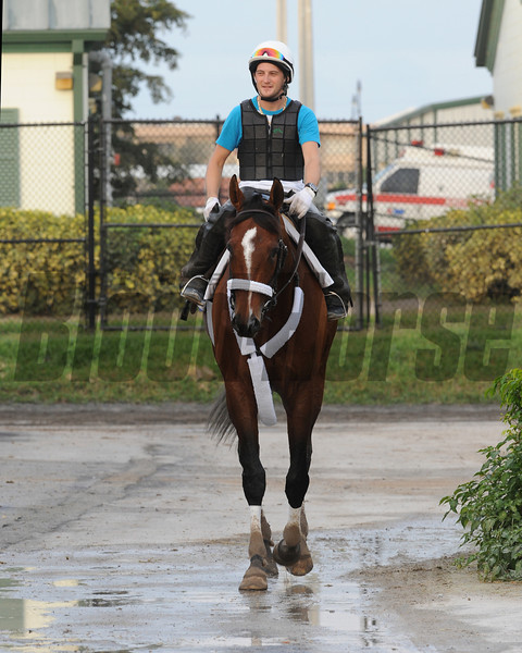 Mucho Macho Man works at Gulfstream Park on January 5, 2013.<br /> Coglianese Photos