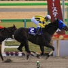 Grape Brandy wins the February Stakes.<br /> Photo by Naoji Inada