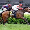 Stephanie's Kitten wins the 2013 Distaff Mile.<br /> Photo by Dave Harmon