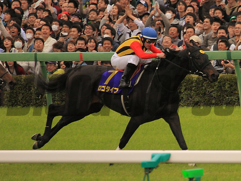 Logotype in the Satsuki Sho.<br /> ©Photo by Naoji Inada