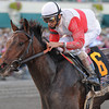 Orb wins the 2013 Florida Derby<br /> Coglianese Photos