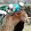 Declan's Warrior wins the 53rd running of the Bayshore at Aqueduct in Ozone Park, N.Y. April 6, 2013.  Photo by Skip Dickstein