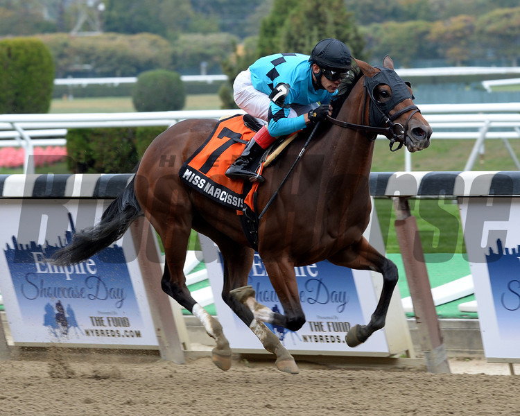 Miss Narcissist wins the 2013 Joseph A. Gimma Stakes.<br /> Coglianese Photos